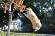2月22日は猫の日!今、マーケティングで猫を絶対チェックしておきたい5つの理由