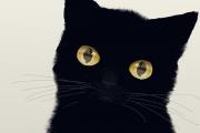 【簡単にそれっぽい】リアルな瞳(目)を描く方法